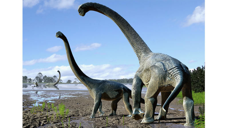 Mom's Phone Call Helps Uncover Oldest Long-Necked Dinosaur on Record