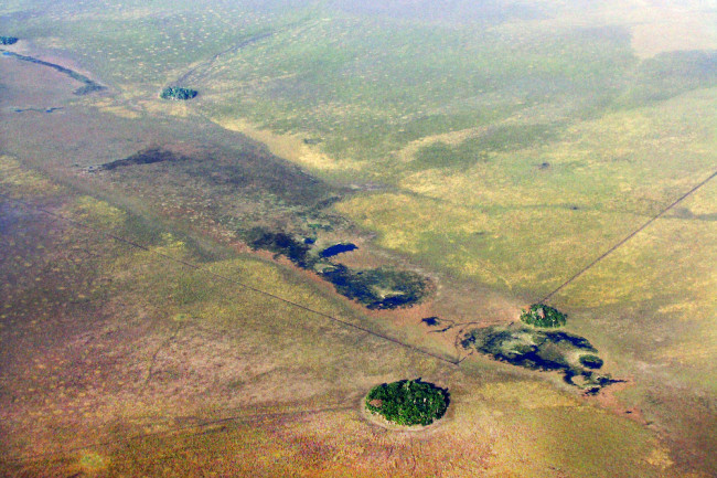 10,800 Years Ago, Early Humans Planted Forest Islands in Amazonia's Grasslands