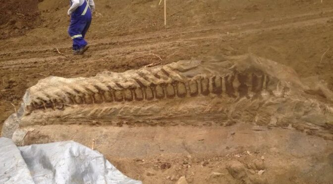 Massive dinosaur fossil unearthed by Alberta pipeline crew