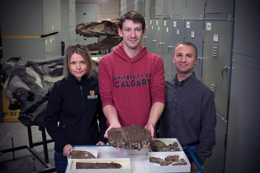 Darla Zelenitsky, Jared Voris and François Therrien stand with the Thanatotheristes fossils.