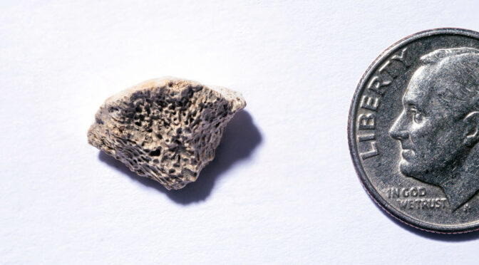 New World Dog Bone Fragment Dated to 10,200 Years Ago
