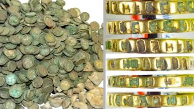 6,500 Medieval Coins And Gold Rings Found In A Field