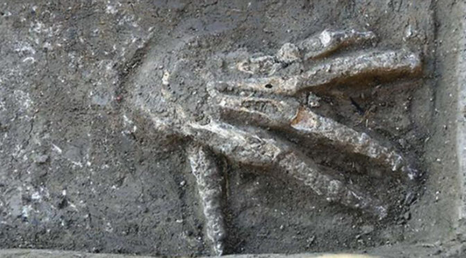 An amazing discovery in Egypt – The bones of a 3600-year-old giant palm