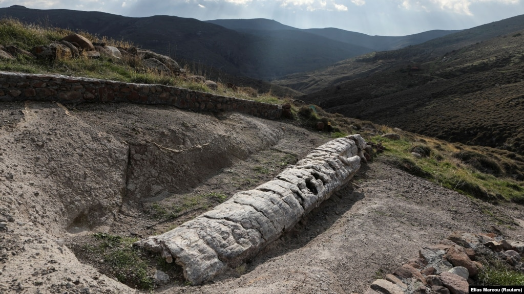 20-million-year-old fossilised tree discovered by scientists in Greece