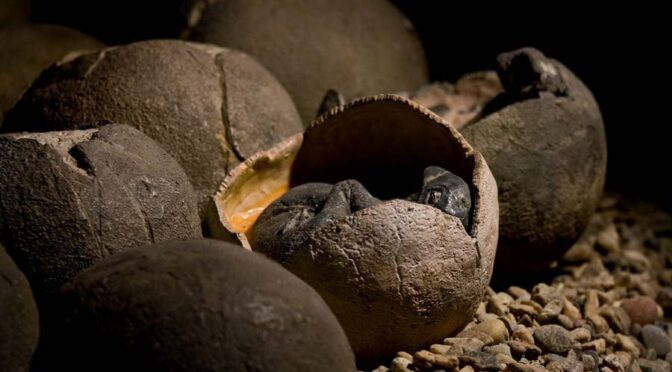 Jaw-Dropping Fossil Find Contains a Dinosaur Sitting on an Entire Clutch of Eggs
