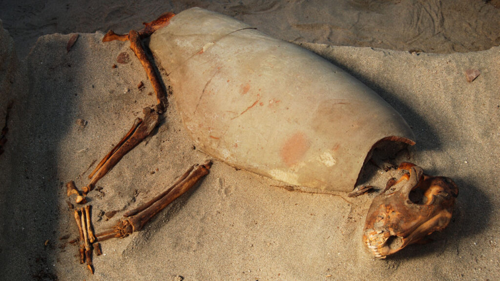 Graves of nearly 600 cats and dogs in ancient Egypt may be the world's oldest pet cemetery