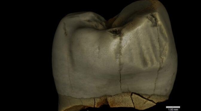 Toothpick Use Identified on Neanderthal Tooth from Poland