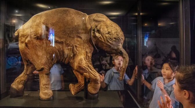 Teenage woolly mammoth with soft tissues intact found on Yamal peninsula