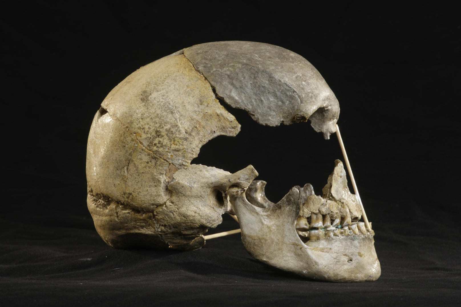 45,000-year-old Skull From Czech Cave May Contain Oldest Modern Human Genome