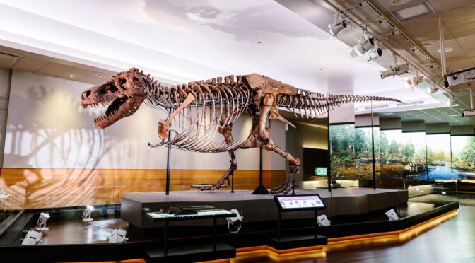 Meet Sue One of the Largest, Most Extensive, and Best Preserved Tyrannosaurus rex specimen
