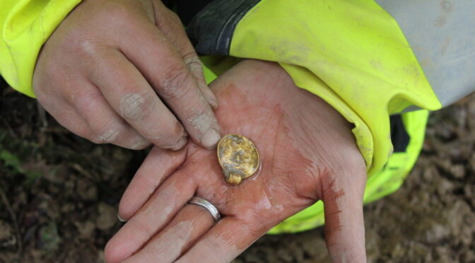 A cache of 1,500-Year-Old Gold Pendants Found in Norway
