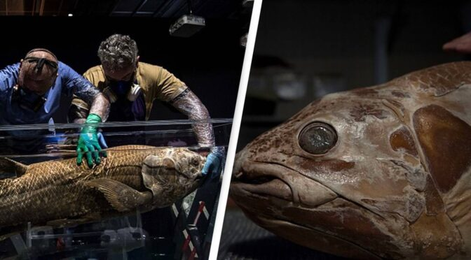 'Extinct Fossil Fish' Dating Back 420 Million Years Found Alive in Madagascar