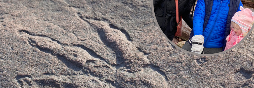 Perfect 215-million-year-old dinosaur print found by a girl, 4, on Welsh beach