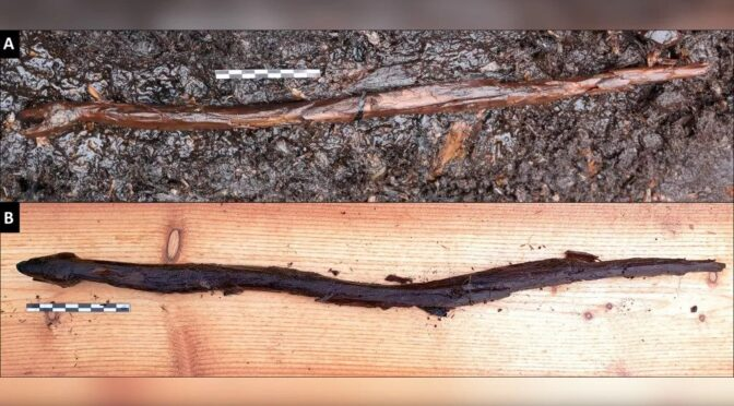 Possible shaman's snake stick from 4,400 years ago discovered in a Finnish lake