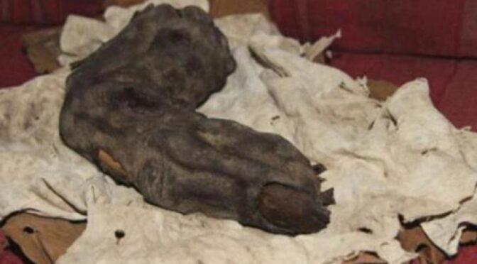 The mummified 'giant finger' of Egypt: Did giants once really roam on Earth?