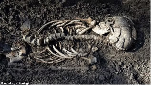 Viking twin babies are found in Christian burial in Sweden