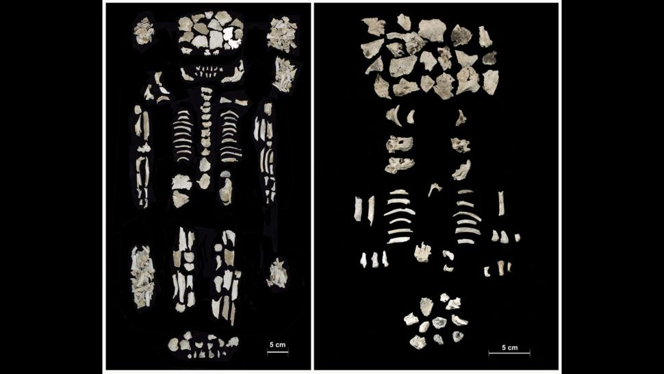 Remains of twin fetuses and wealthy mom found in Bronze Age urn