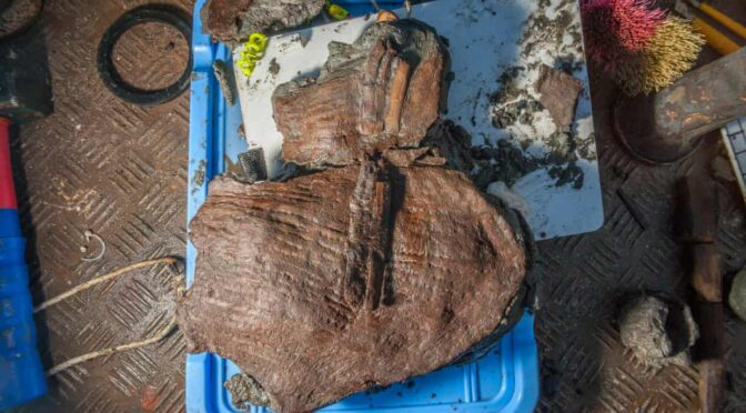 2,400-year-old fruit baskets from Thonis-Heracleion found off the coast of Egypt