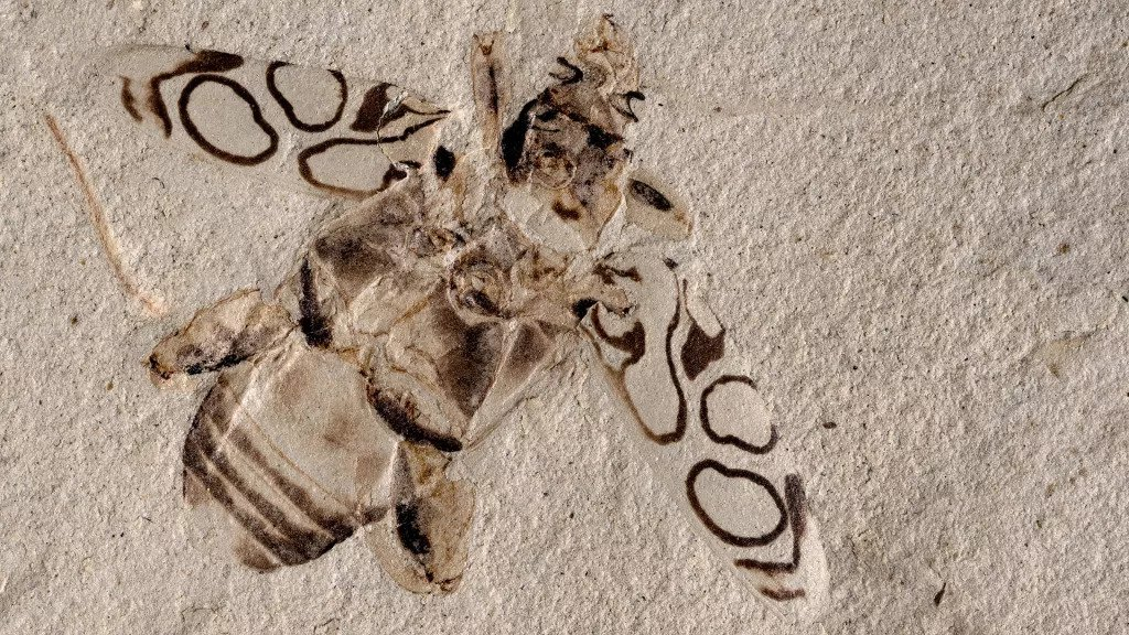 The insect, which is 49 million years old, appears to have been smashed just a few days ago