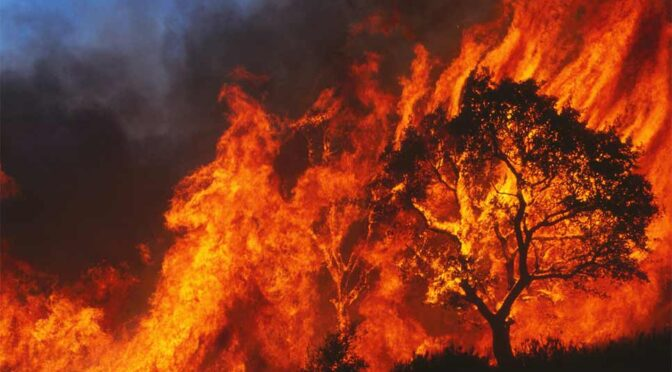 Tragic Loss: 2,500-Year-Old Olive Tree Burned to Ashes in Greek Fires