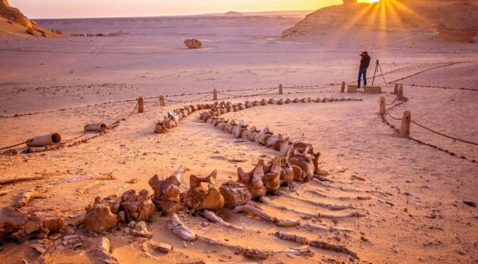 In the middle of Egypt's desert, there is a Valley of Whales which is millions of years old.