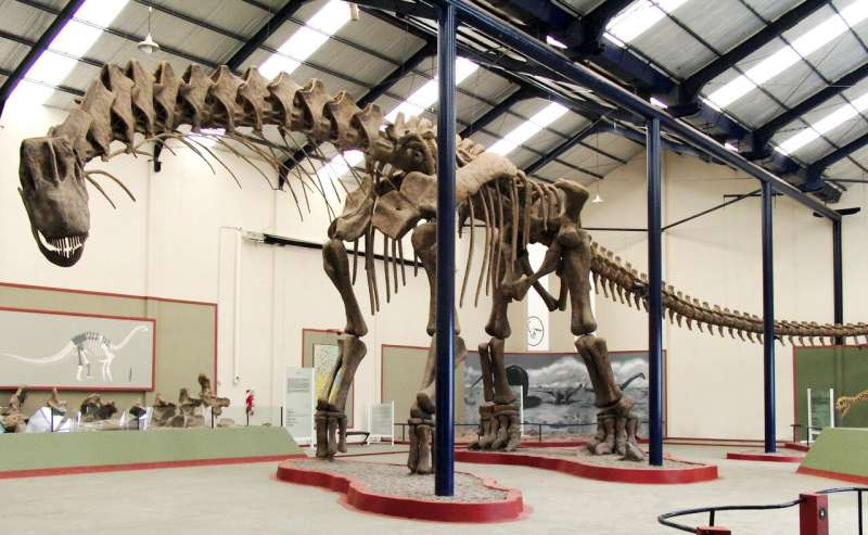 Dinosaur fossils found in Argentina could belong to the largest creature ever to have walked the Earth