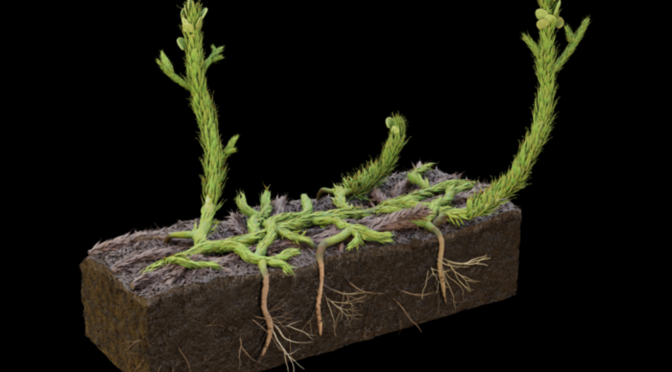 Scientists Reconstruct First-evolved Plant Roots Using 400-million-year-old Fossil