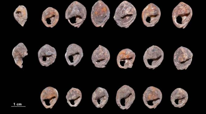 Shell beads found in Moroccan caves are at least 142,000 years old