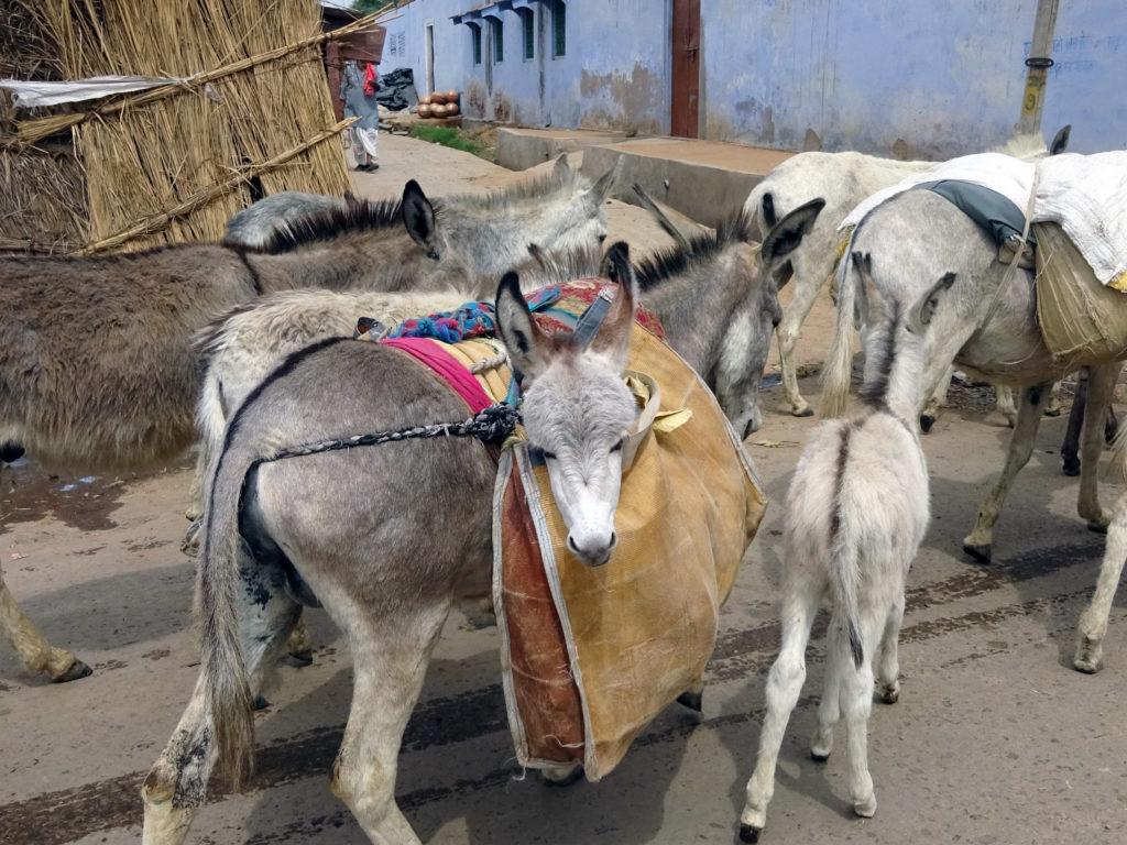 Nomads - Jaipur - 2