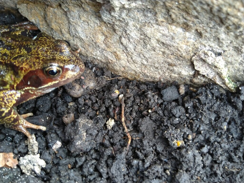 picture of a frog next to a dry stone wall in whalley