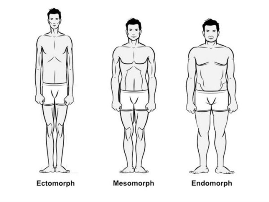 Classification of Human Body into different types Ectomorph, Mesomorph and Endomorph.