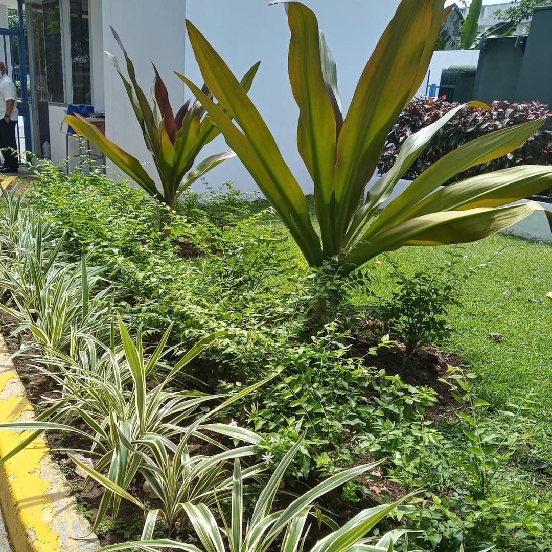 jardines
