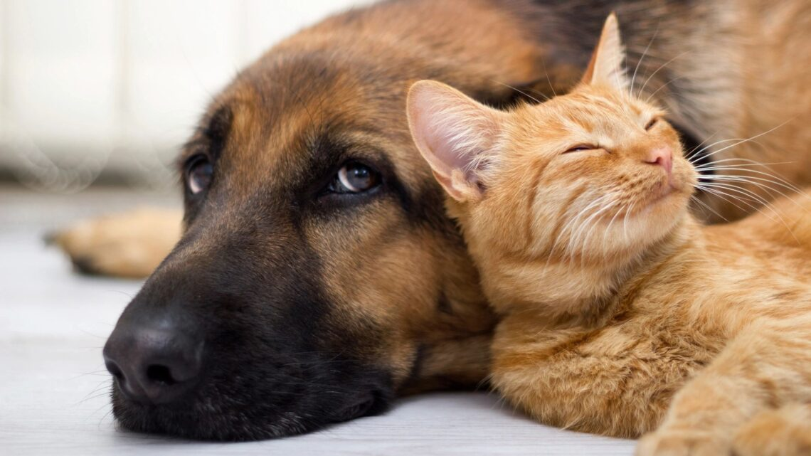 Should you have a legal estate plan for pets?