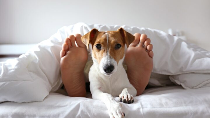 Top 12 Dog-Friendly Hotels Around the World