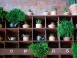 DIY Plant Shelves Ideas