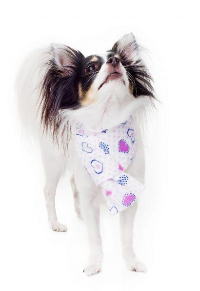 Kajamaz ''Meilė'': derantys flaneliniai kaklaraiščiai šuneliams