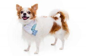 Kajamaz ''Naktinės pelėdos'': derantys flaneliniai kaklaraiščiai šuneliams
