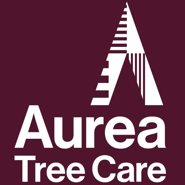 Tree Surgeons in Glasgow | Aurea Tree Care