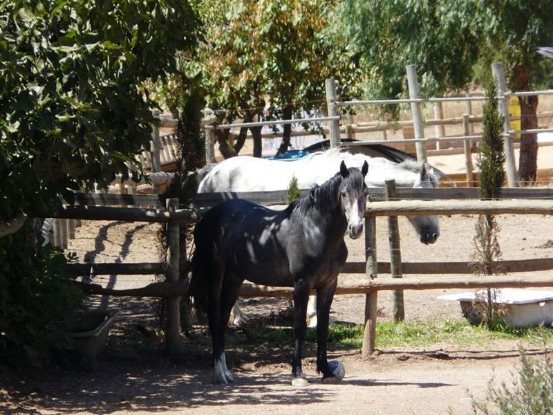Activities Page - Horseriding Photo