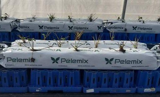 Bolsa de cultivo para fertirrigación