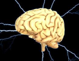 מוח האדם
