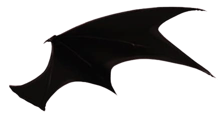 right wing bat