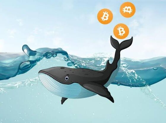 Bitcoin Whale Cluster Determines Three key Price for BTC Recovery