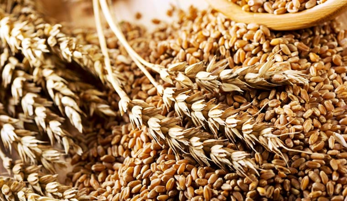 Blockchain Firm to take Advantage of the Biggest Wheat Market in the World