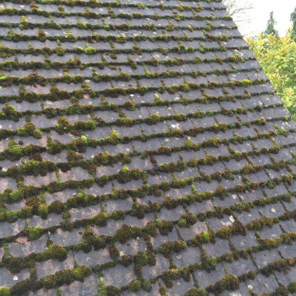 Moss accumulation on old roof.