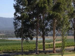 Australia Hunter Valley