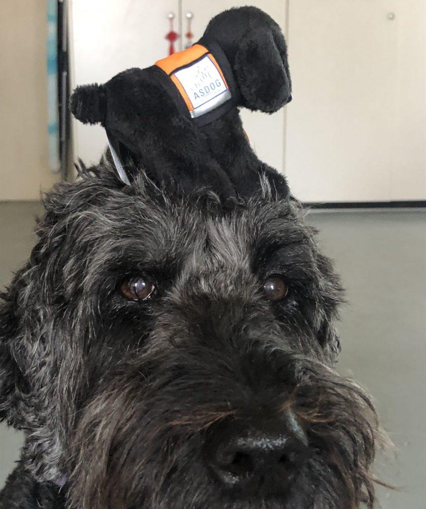 Australian Support Dogs ASDOG