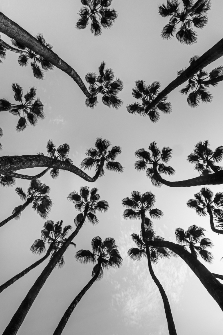 Suzy Mitchelll- Fine Art- Palms-5