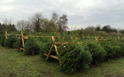 Grappenhall Christmas Trees – Season Updates