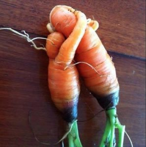 Carrots hugging